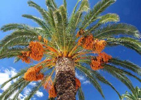 palm02